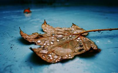 autumn-leaf-fallen-1920x1200