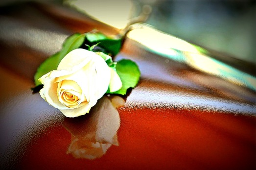 Rose-on-coffin1