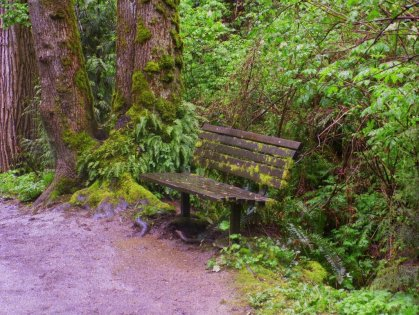 woods bench